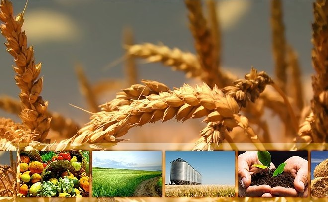 All about AgroDomain Webstore and it Features
