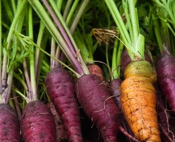 DIY Plant Science: Grow Your Own Purple Carrots in 10 Steps