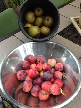 fruit harvest (part of) aimee cartier blog