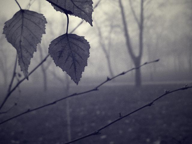rain leafs cc pic by David Sterbik
