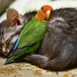 Foto eines Papageis