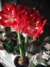 Foto einer Topfpflanze