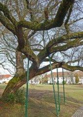 Foto, Baum wird mit Stangen gestützt