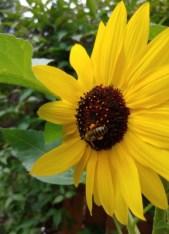 Foto einer Blüte