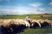 027 Pastoreo Santa Cristina de Valmadrigal