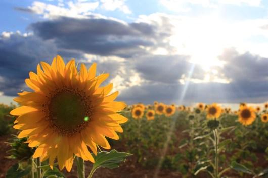 178 Mantenga su rostro al sol y no verá la sombra Quintanilla de los oteros