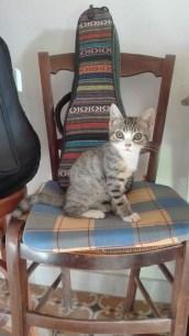 013 - Gato Músico