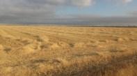 035 - Mar de Oro
