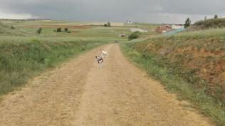 083 - Admirando el Camino de Regreso