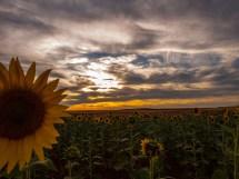 095 - Enfadados con el Sol