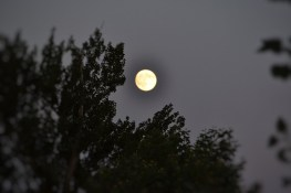 134 - Luna y árboles