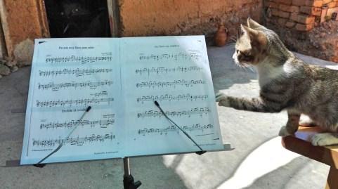 149 - Sonata en miau menor