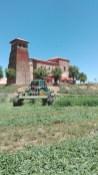 Segando Bajo la Iglesia de Villabraz