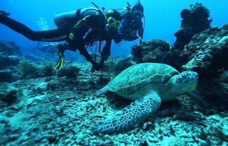 길리 트라왕안 스쿠버다이빙 바다거북