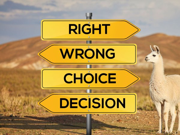 Software Decisions
