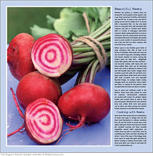 Beautiful harvest beets photo by Lynn Karlin from The Organic Kitchen Garden 2015 wall calendar.