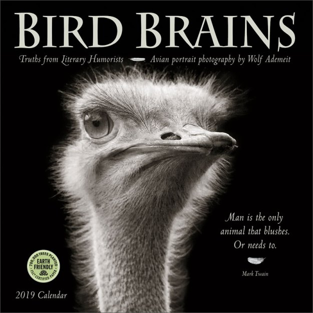 Bird Brains 2019 Wall Calendar
