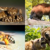 10 Most Dangerous Animals in the USA