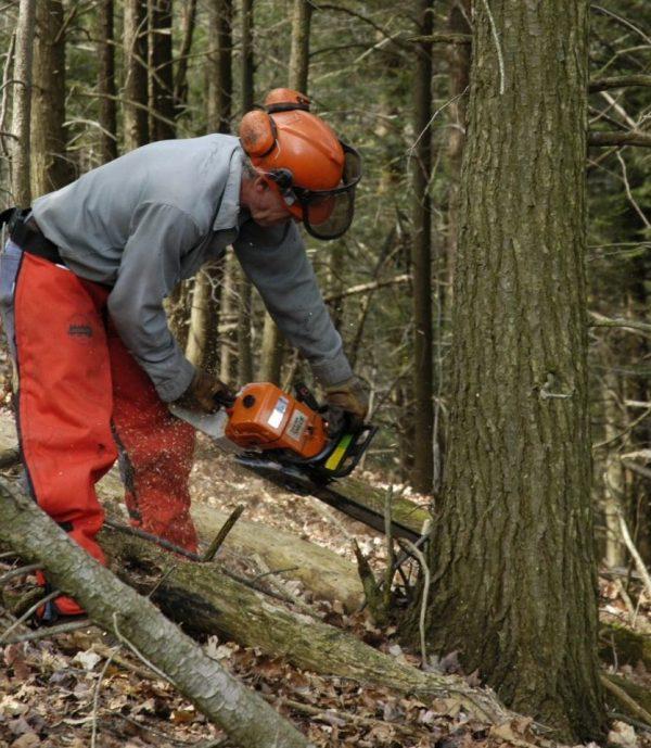5 Expert Chainsaw Maintenance Tips – AMSOIL Blog