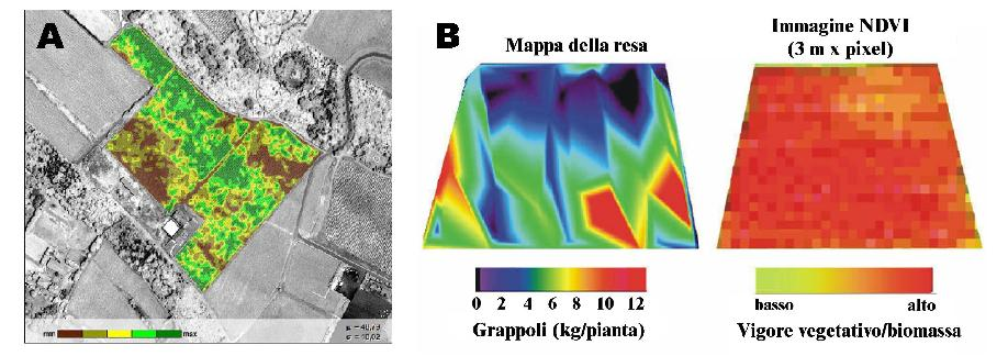 Thematic maps concerning the crop yield obtained with multispectral images