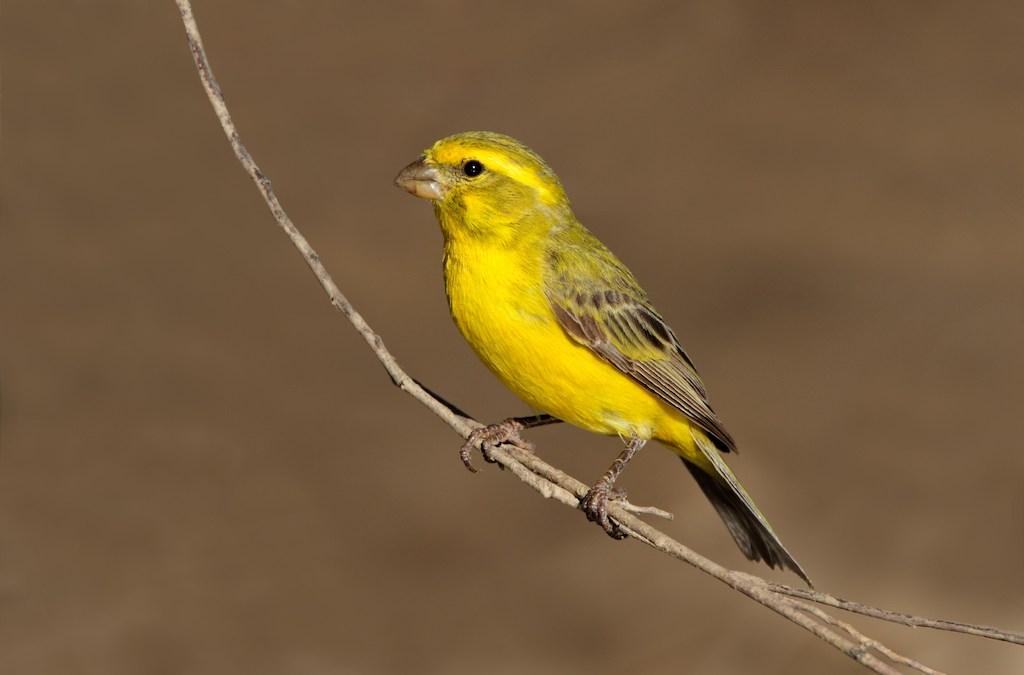 Deployment com Canary Releases