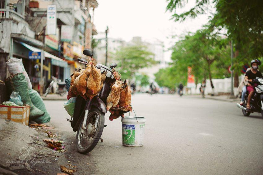0015 vietnam iii aub 21814 - Vietnam 2013 - Hué und Hoi An von der Kaiserstadt