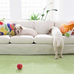 Cat Friendly Sofa Fabric Donate A Pick Up Pet How To Choose Furniture