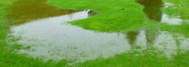 7 Signs of Potential Drainage Problems