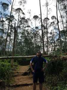 Hutan Keren di Kawasan Wisata Dieng