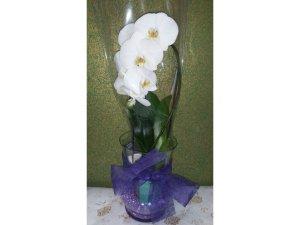 Orquidea en maceta de cristal