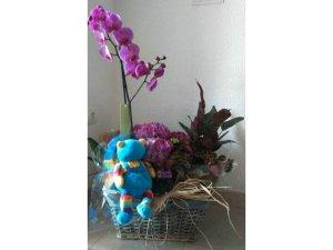 Plantas para celebrar un Nacimiento