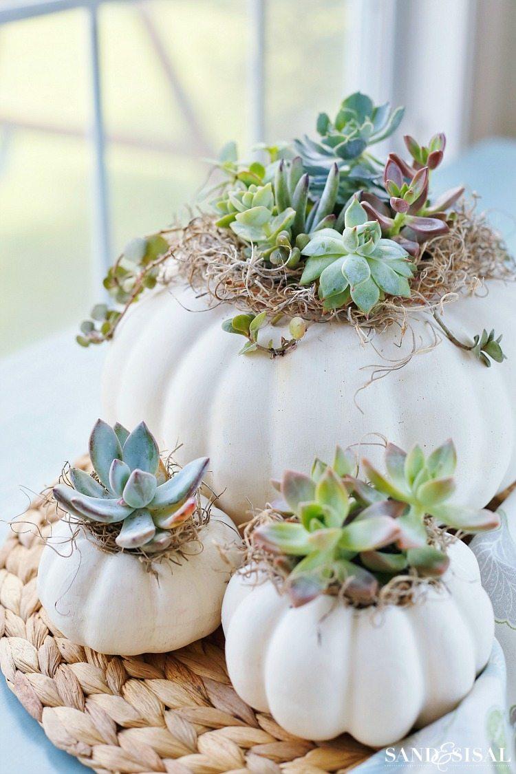 Succulent Pumpkin Planters | Decorating With Pumpkins