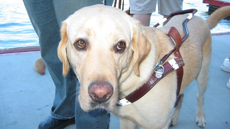 Assistance dogs should be welcomed by all airlines