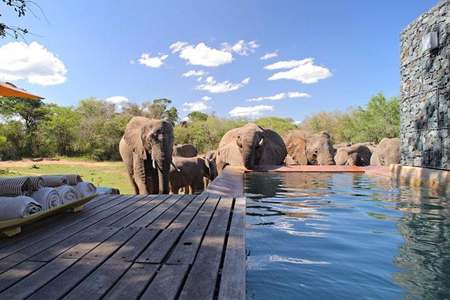 Andbeyond Phinda Homesetas, South Africa