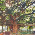 História e Cultura em Santa Catarina