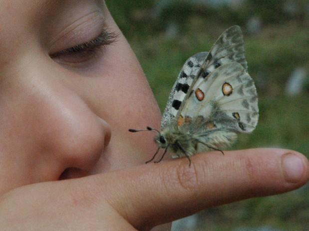 Descubrimiento de flores y mariposas