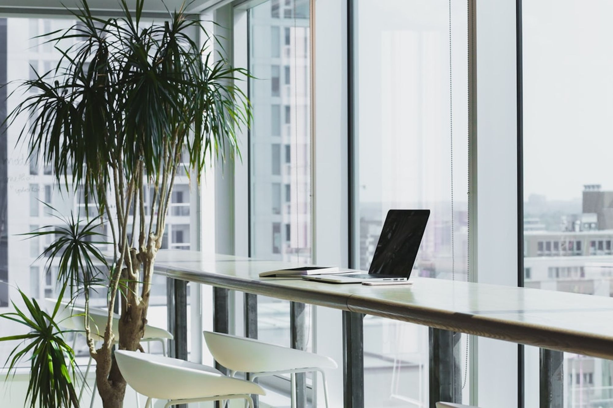 Plants Are the New Way to Hack Your Productivity. Here's How.