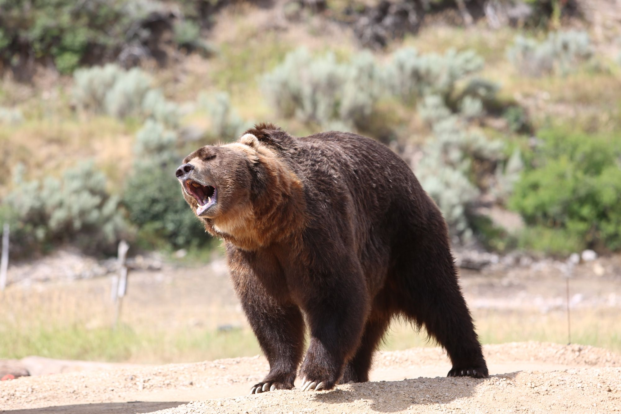 How to Be a Sports Broadcaster (And Avoid Getting Eaten By Bears)