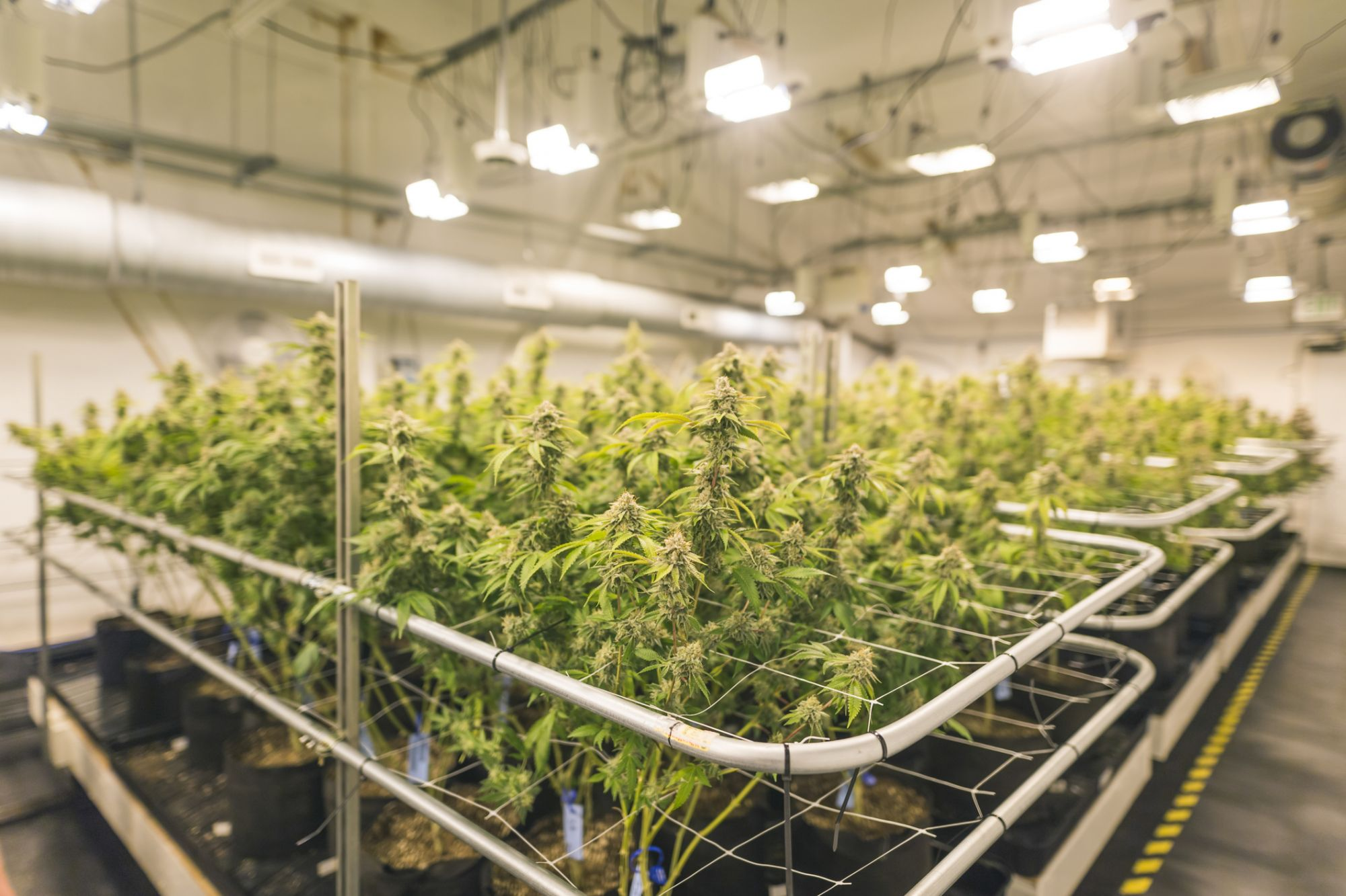 How To Redesign Your Indoor Grow For Sustainability