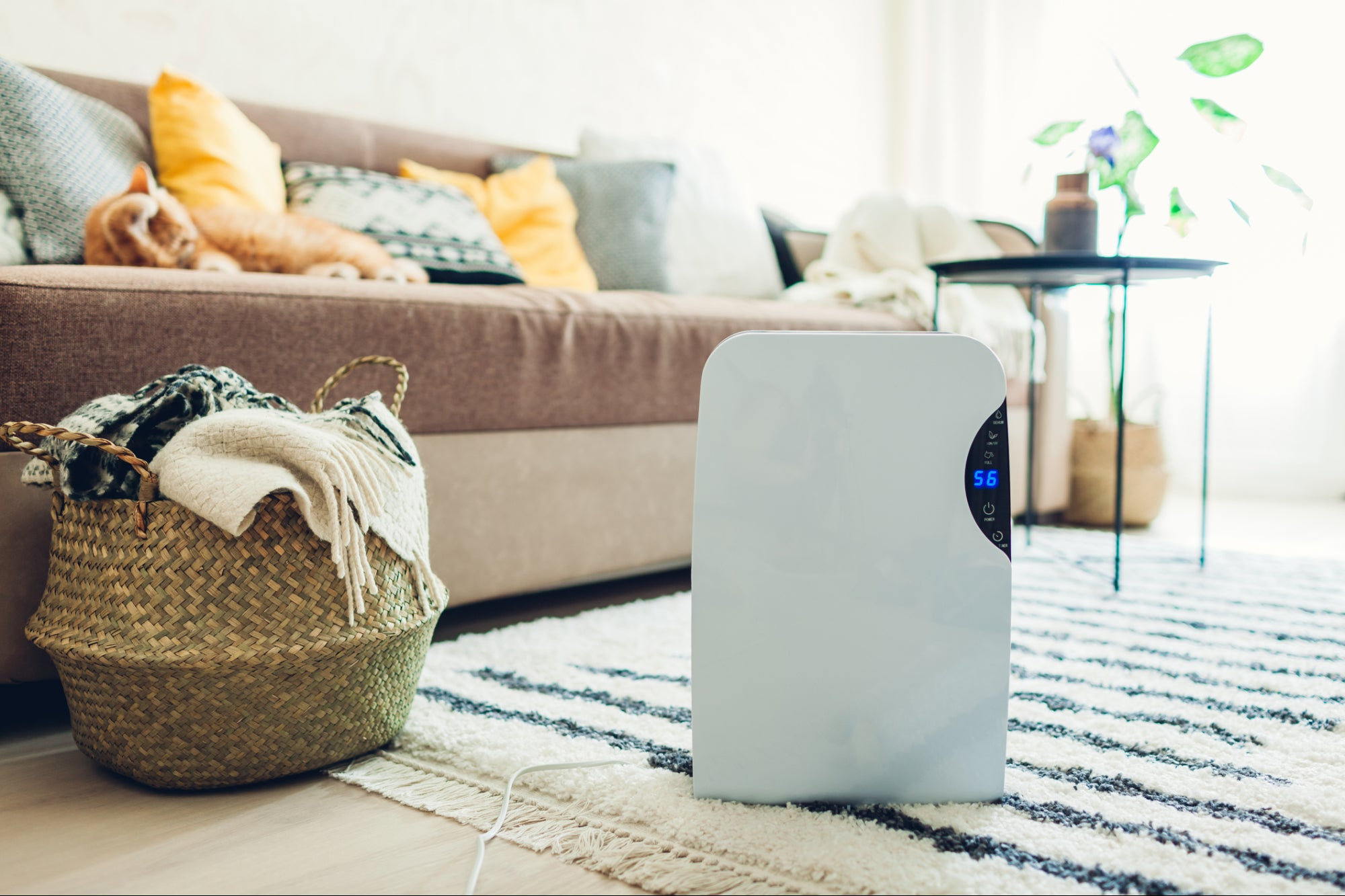Is The Air In Your Home Making You Stupid? You Might Be Surprised.