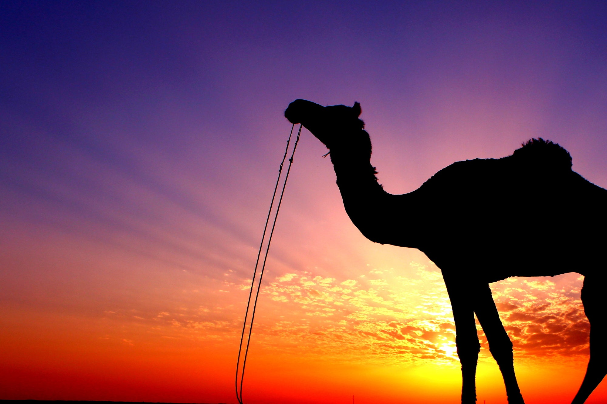 'Camel Startups' Put a High Value on the Quality ofTheir Products