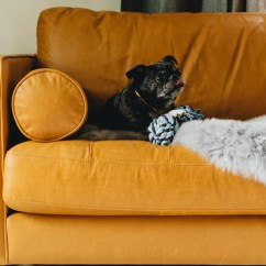 What Is The Best Living Room Furniture For Dogs Design Idea 5 Tips Choosing Pet Friendly Articulate Ahmed Says Leather By Far Easiest Material To Keep Clean And Maintain When Your S Drool Situation Gets Out Of Control Part