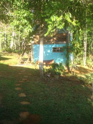 pensamento tropical artsper