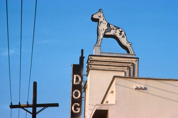 Vintage Dog Sign