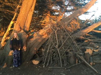 Fun Tree Sculptures Near Big Sur
