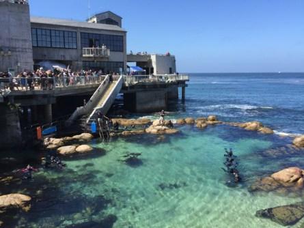 Famous Monterey Aquarium