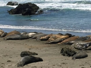 Elephant Seals near San Simeon