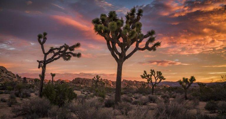 Joshua Tree desert landscape at Sunset