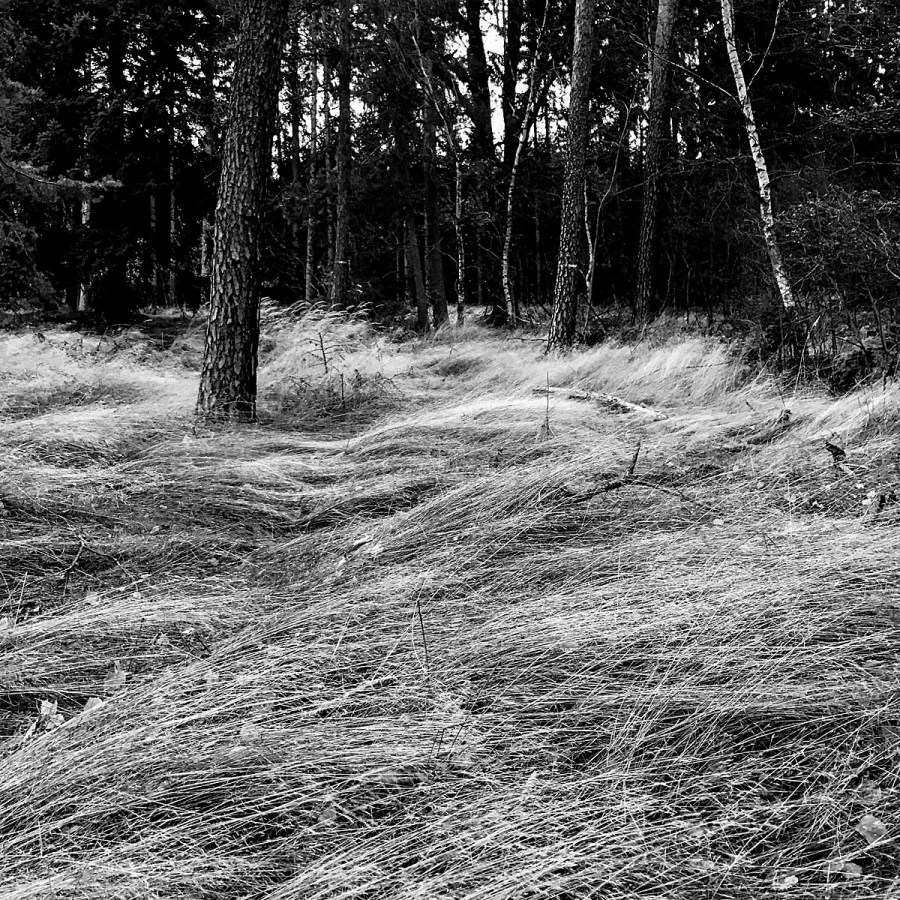 forest_6865_sw_kl