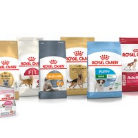 Royal Canin Cat Food Helps Your Cat Grow Better